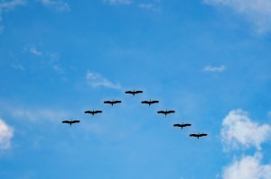 birds-216827_640