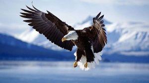 Amazing_Eagle